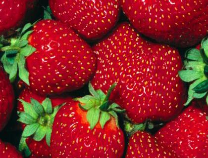 La fresa una de las frutas más deliciosas y que más beneficios, aporta nutrientes y mejora el estado de ánimoa al ser humano.
